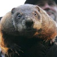 groundhog-day-200px