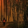 russian-wildfire-200px.jpg