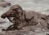 seabird-oil-spill-200px.jpg
